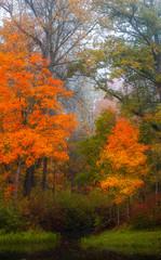 Fototapeta Las nice autumn