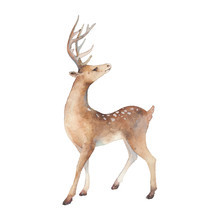 Watercolor Deer Illustration. Isolated Animal Silhouette On White Background.
