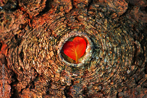 Photo  Autumn red Leaf Heart tree