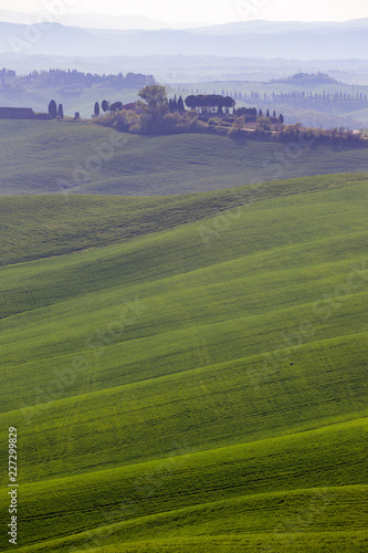 Canvas Prints Honey Typical Tuscan landscape - green waves