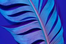 Bird Feather In Violet Illumin...