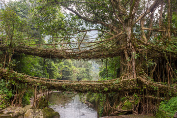 Famous Double Decker living roots bridge near Nongriat village, Cherrapunjee, Meghalaya, India. This bridge is formed by training tree roots over years to knit together.