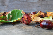 Horse Chestnuts On A Wooden And  Leaves. Autumn Colorful  Background