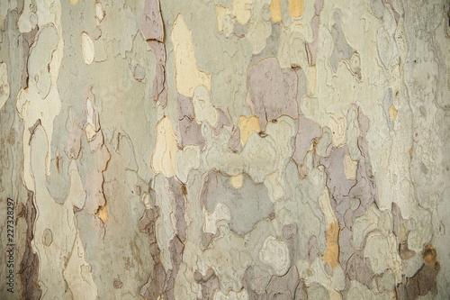 Foto auf AluDibond Alte schmutzig texturierte wand texture of old tree bark