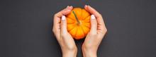 Small Orange Pumpkin Woman Hands Black Background