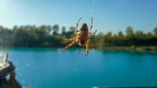 Spider On The Web Close-up. In The Background - A Bright Blue Lake, Green Forest.