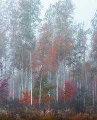 Fototapetabirches in te mist