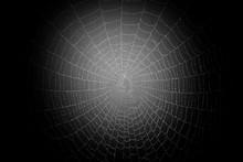 Mist Covered Spider Web