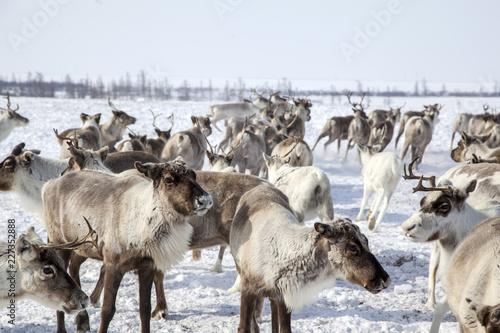 Fotografie, Obraz  Yamal peninsula, Siberia