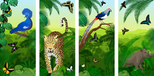 Set Of Vector Jungle Rainforest Vertical Baners With Jaguar Or Leopard, North Sulawesi Babirusa,  Diamond Lady Amherst's Pheasan, Victoria Crowned Pigeon And New Guinea Birdwings Butterflies