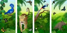 Set Of Vector Jungle Rainfores...