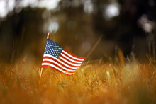 Group Of American Flags In Yel...
