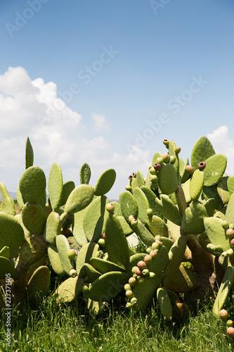 Cactus trees.