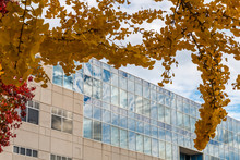 A Large Mirror Glass Covered Building Reflects The Blue Sky And White Clouds. Branches From A Yellow Leafed Jingo Tree Is Framing The Picture.