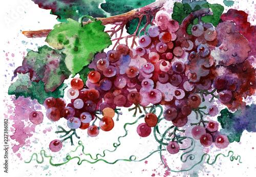 Fototapeta vine on white background obraz na płótnie