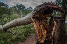 Destruction From Hurricane Mic...