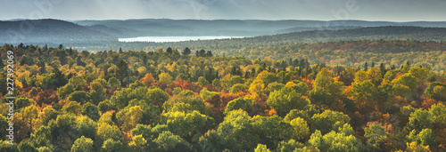 Photo  Aerial view panorama of trees in a colorful autumn season forest