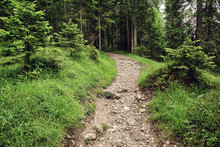 Stone Path In The Beautiful Mountainside Spruce Forest, Summertime Hiking Trail. Outdoor Travel Background