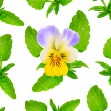 Seamless Background With Viola Tricolor. Isolated On White