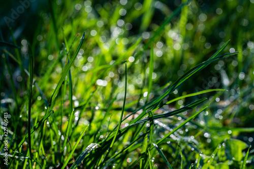 Graslandschaft im Sonnenschein