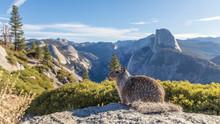 Kalifornischer Ziesel Auf Dem Glacier Point Im Yosemite National Park - Yosemite Valley, Mariposa Country