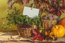 Autumn Harvest, Pumpkin, Pine ...