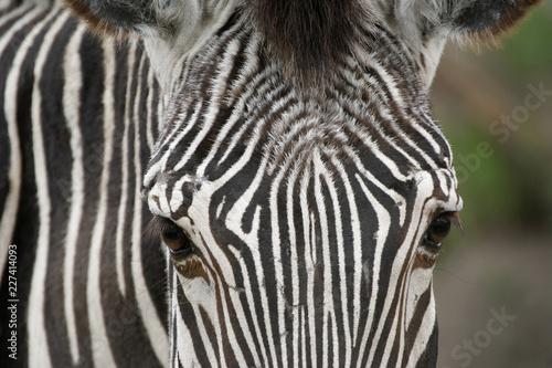 Tuinposter Zebra Horizontal close up image of zebra face.