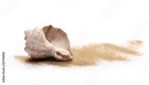 Seashell in sand pile, isolated on white background