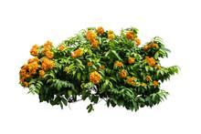 Flower Plant Bush Tree Isolate...