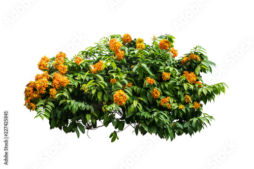 flower plant bush tree isolated with on white background clipping path Fototapet