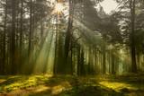 Fototapeta Krajobraz - jesień w lesie Warmii