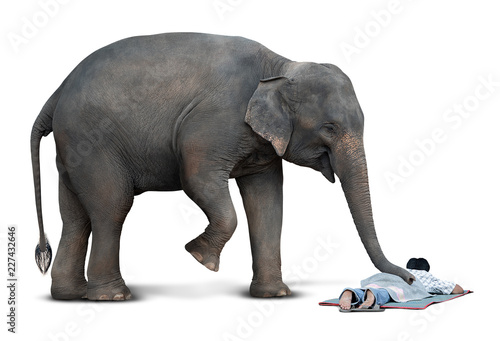 Foto op Aluminium Olifant Massage from elephant