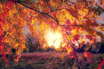 Fototapeta Jesień Autumn colors from Sotkamo, Finland.