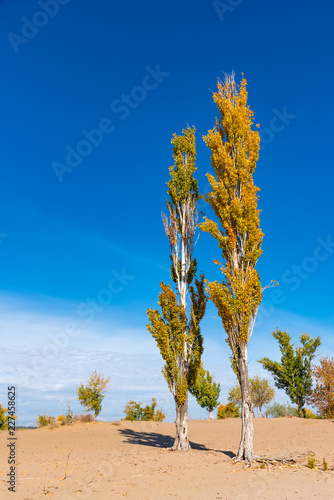 Autumn landscape - trees on the sandy shore and a beautiful blue sky in the background
