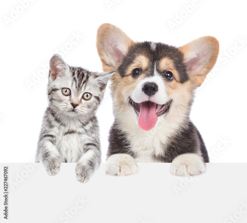 Cat and dog peeking behind empty white board. isolated on white background. Space for text © Ermolaev Alexandr