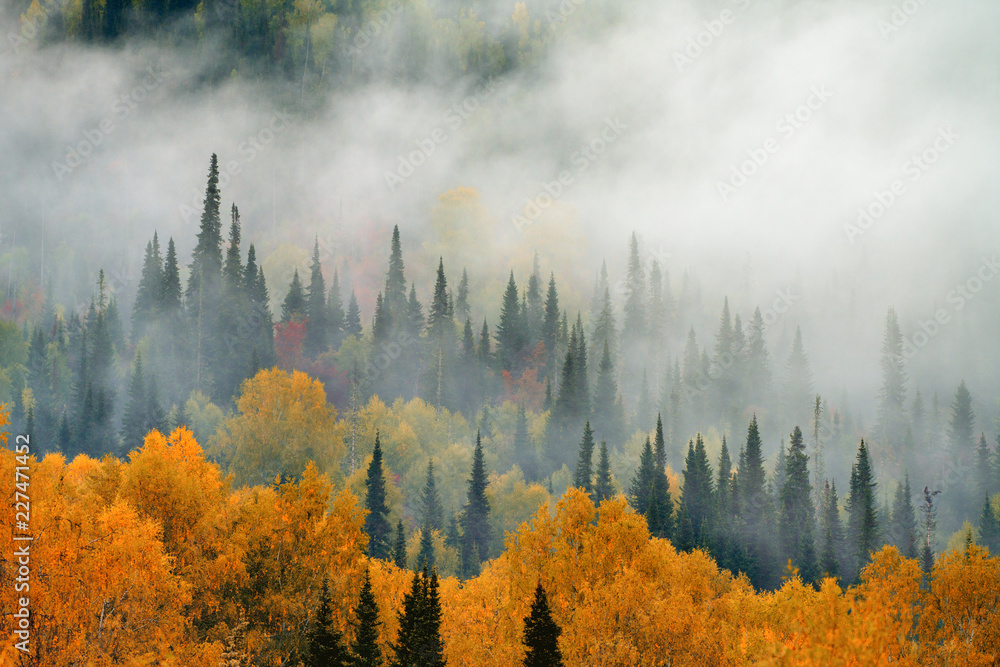 Autumn. Fog in the forest.