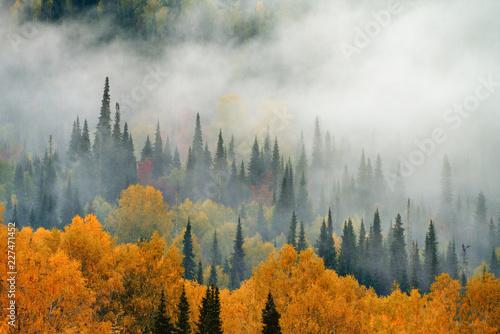 kolorowe-drzewa-we-mgle