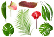 canvas print picture Fresh tropical monstera leaf on white background