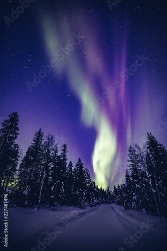 Poster Violet Beautiful Northern Lights (Aurora Borealis) in the night sky over winter Lapland landscape, Finland, Scandinavia