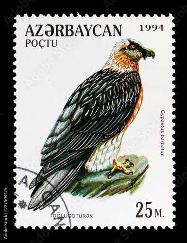 Fotografia  Bearded Vulture (Gypaetus barbatus), Birds of Prey serie, circa 1994
