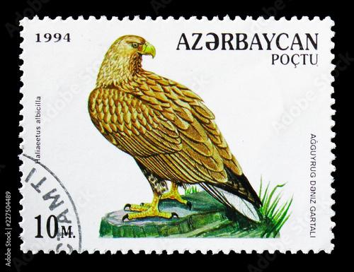 Fotografia  White-tailed Eagle (Haliaeetus albicilla), Birds of Prey serie, circa 1994