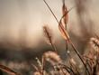canvas print picture - natur