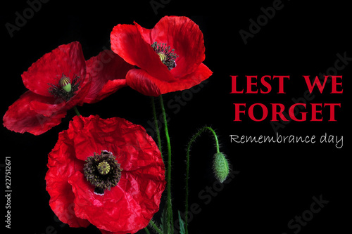 Garden Poster Poppy Remembrance Day greeting card. Beautiful red poppy flower on black background with lettering