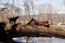 Man And Dog On Fallen Tree Trunk