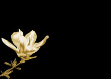 Gold Flower On A Black Backgro...