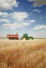 Woman Driving Tractor On Wheat Field