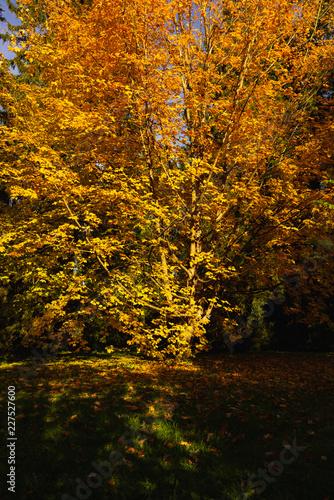 Stickers pour porte Orange eclat trees fall colors golden leaves