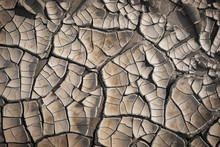 Cracked Dry Mud Pattern