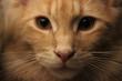 canvas print picture - Occhio felino