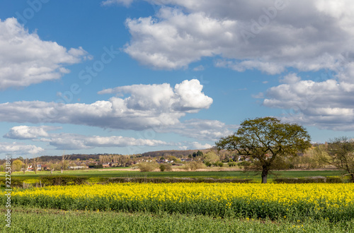 Cuadros en Lienzo Essex countryside on farmland in the Spring.
